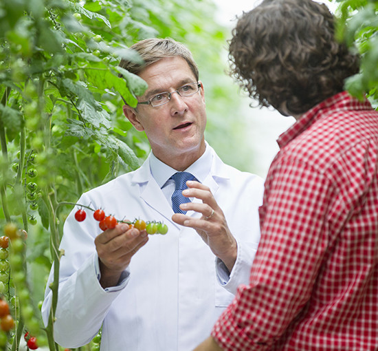 A scientist and farmer in discussion among tomato crops